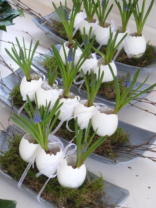 bloembolletjes in eierschalen